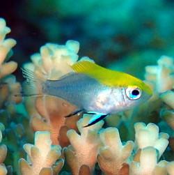 可愛い幼魚の季節