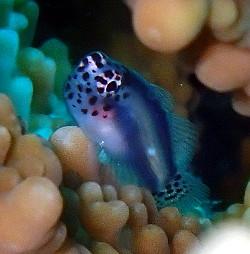 サンゴがあってこそ
