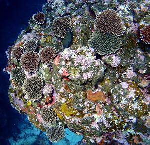 サンゴの成長